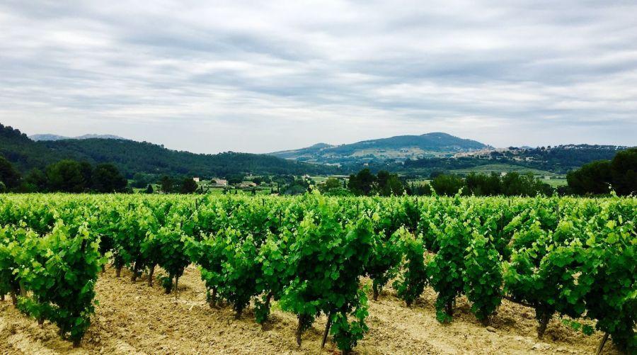 Domaine de la Bégude : découvrez ce vignoble et ses vins